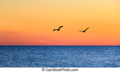 Pair of Pelicans Flying at Sunset - Silhouette of a pair of...