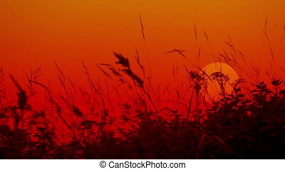 Meadow grass against the setting sun Silhouettes - Video...