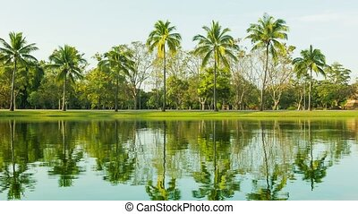 Palm trees on the edge of the pond. Beautiful reflections in the water.