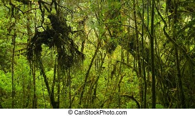 Thickets usual rainforest. High mountain Thailand - Video...