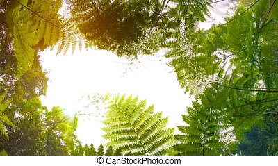 Ferns in the rainforest. View from the bottom up - Video...