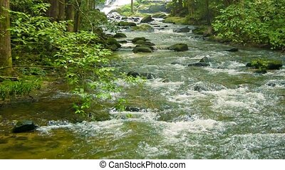 Small river in the forest. Chiang Mai, Thailand - Video...
