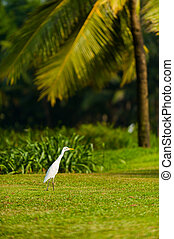 Bird on Goa  - White bird on the coast of Goa