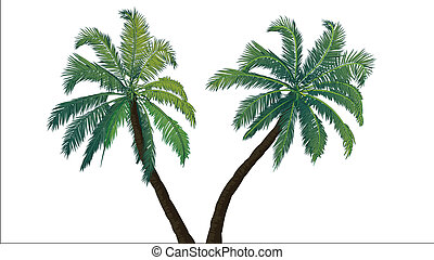 Two palm trees. Tropics. Places of subtropical and tropical...