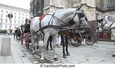 Horse Carriage Vienna - Traditional horses and carriage in...