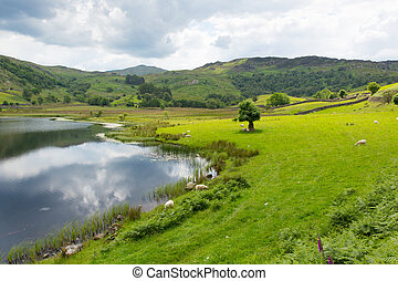 Watendlath Tarn Lake District Cumbria England between the...