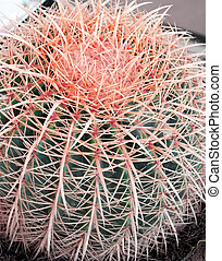 Tropical green cactus - cacti one