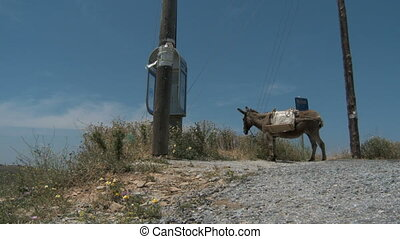 Donkey resting - Donkey standing besides a way on the Island...