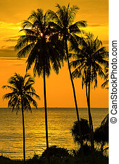 Palm tree silhouette at sunset, Thailand