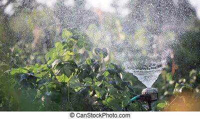 Watering gardens natures