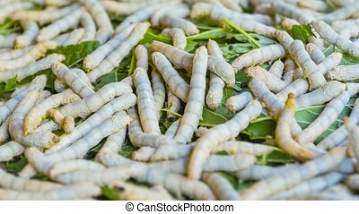 Live silkworm caterpillars on a pile of leaves