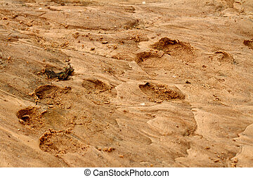 Hippopotamus Foot Prints in the Sand - A pair of large hippo...