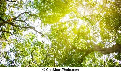 Crowns of trees with bright afternoon sun and rays. - Video...
