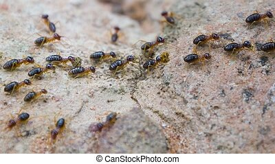 Termites carry something to mound - Video 1080p - Termites...