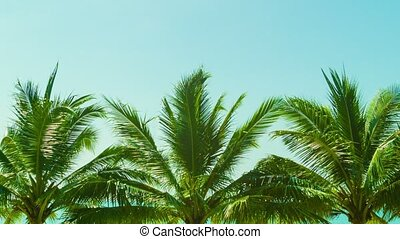 Several tropical palm trees against the sky