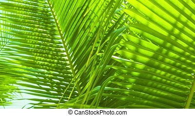 Palm leaves swaying in the breeze