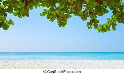 White sand beach and tropical vegetation on the edge