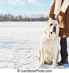 Man and central Asian shepherd walk in the lake