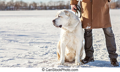 Man and central Asian shepherd walk in the lake - Man and...