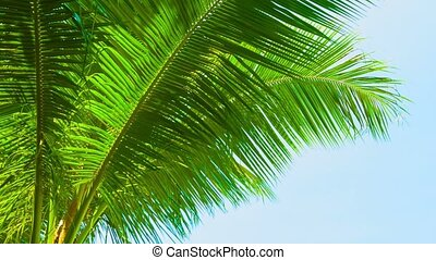 Large palm leaves against the blue sky