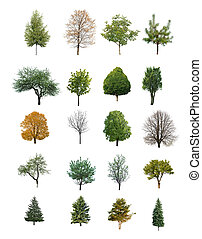 trees isolated - trees are isolated on a white background