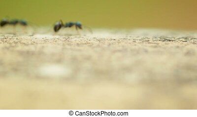 Fast marching ants - Video 1080p - Fast marching ants