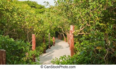View of the wooden bridge in the bush. Cambodia