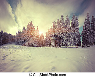 Colorful winter morning in the mountain forest Retro style