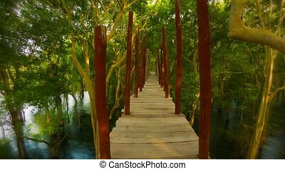 Go on a wooden bridge over the water in the bush. Cambodia