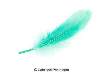 Green Feather with white background