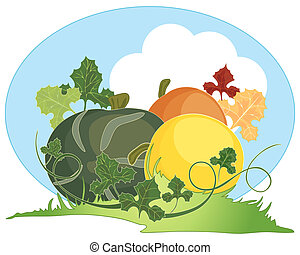 autumn squash - an illustration of three colorful home grown...