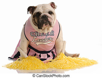 dog dressed as cheerleader - adorable english bulldog...