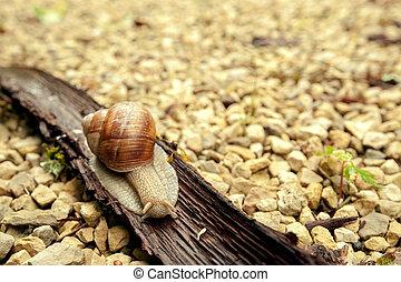 Crawler snail