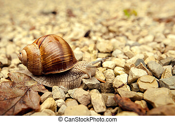 Snail crawling on the rocks