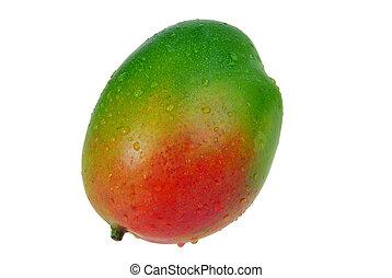 Mango 04