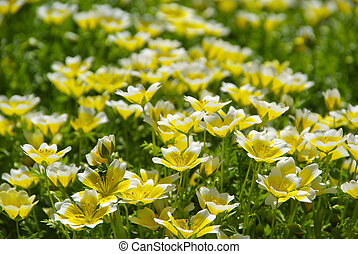 poached egg plant 10