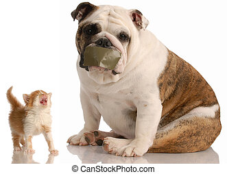 dog and cat fight - english bulldog with tape on mouth...