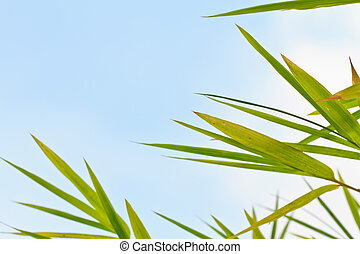Bamboo leaves - Fresh bamboo leaves border, sunny blue sky,...