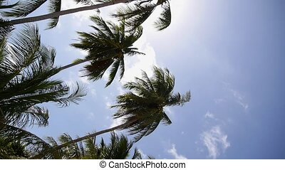 Coconut Palm Trees against Blue Sky. Exotic Island Koh...