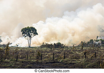 Brazilian Amazonia Burning - Amazonia Forest burning to open...