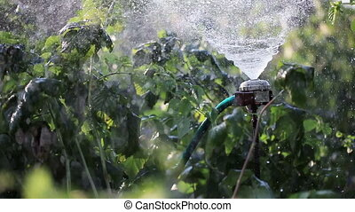 Watering garden nature - Artificial watering plants in...