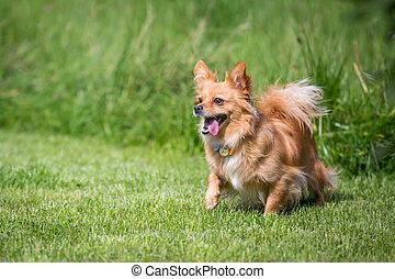 Auf der Suche - Kleiner brauner Mischlingshund auf der Suche...