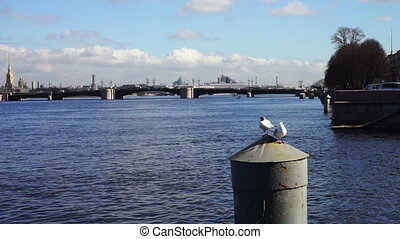 Neva river quay with white seagulls, St. Petersburg - White...