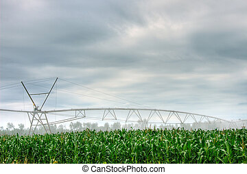 Irrigate - System of the irrigate in the Landas France