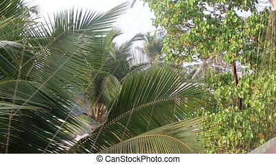 leaves of palm trees swaying in the wind