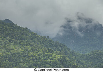 beautiful mountain scenery ,forest and misty