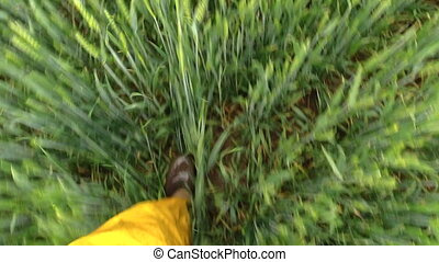 walk wheat pov - Man foot with rubber boots shoes and...