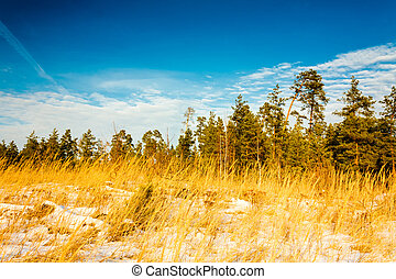First snow covered the dry yellow grass in forest. Russian...