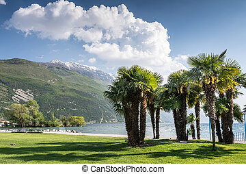Palm Trees at Lake Garda - Palm trees at the beach of Lake...