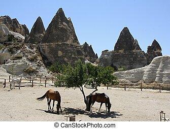 Cappadocia  Turkey and horses